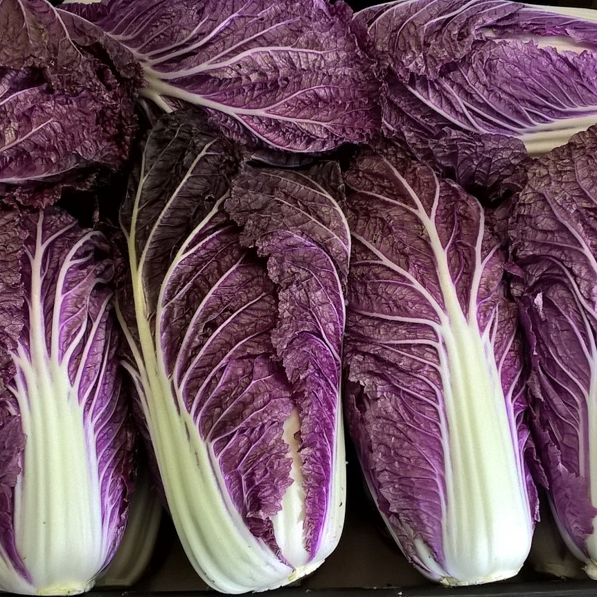 Red Chinese Cabbage