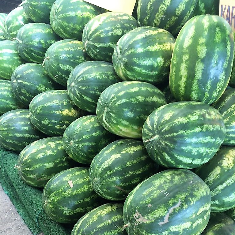 Good results watermelon Nevada F1 in Central-Asia