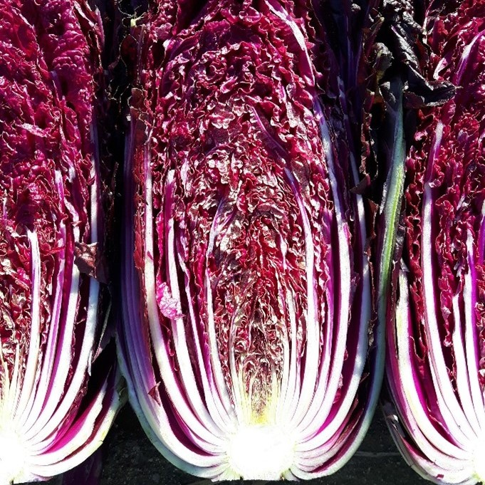 Cabbage Chinese Red
