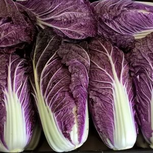 Chinese cabbage Scarrossa F1 (3)