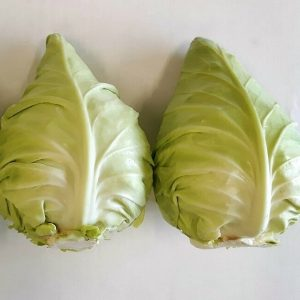 Pointed cabbage WS 3308 F1 (3)